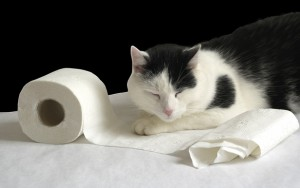 Cat and soft paper.