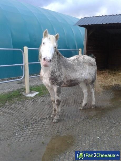 Photo de cheval trouver sur le site Fan2chevaux.fr